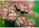 Matematikçi Örümcekler!