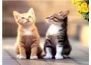 Kedi'ye tecavüz! Allah alsın sizi dilerim!