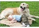 Köpek sevgisi, Köpek bakımı ve Köpek dışkısı üzerine