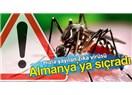 Bulaşıcı  Zika virüsü ve taşıyıcısı sivrisinekler