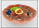 Tek bir hücre evrim teorisini yıkmaya yeter...