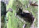 """Abla""nın Meksika, Guatemala, Honduras gezisi 6: Palenque - Campeche"