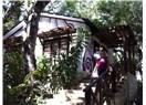"""Abla""nın Meksika, Guatemala, Honduras gezisi 12: Tikal – Flores – Antigua"