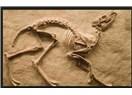 Bütün fosilleri 3D izleyin!