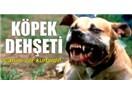 Hindistan'ın inekleri, İzmir'in köpekleri!