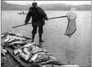Boşa geçen bir Balık mevsimi daha..
