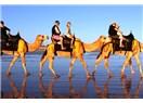 THY develerini kesmesin, yolcularına versin...