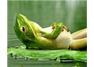Sıcak suda yavaş yavaş pişen kurbağa gibiyiz...