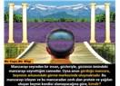 Bizler gördüğümüz herşeyin sadece beynimizde oluşan görüntüsüyle muhatabız....