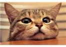 Kedi bağımlılığı sendromu