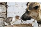 Sokaklarda hayvan beslenmesine karşı olan insanlar