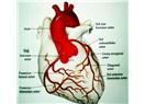 Kalp sağlığımız için yapmamız gerekenler