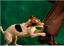 Mecliste köpek mi besleniyor?