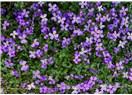 Toros Dağlarının Endemik Çiçekleri