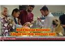 MAKÜ Hayvan Hastanesi'nden başarılı operasyon