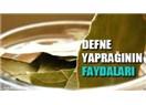 Defne Yaprağı faydaları nelerdir ve çayı nasıl yapılır?