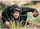 Belki de Sen, Yüzüncü Maymun Olabilirsin