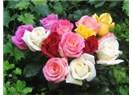 Gül ki güller açsın gül yüzünde