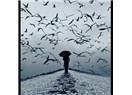 Bulutlarda volta atan kuşlar