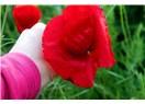 Özgür çiçeği seviyorum