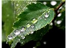 Yağmur ertesi