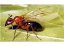 Kanatlı karıncaların günü