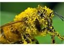 Polen alerjisinden nasıl kurtuluruz?