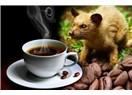 Kedi Dışkısından En Pahalı Kahveye
