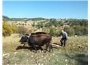 Köylü Bir Evlek Yeri Ekse Ne Olur, Tarım Organizasyon İşi