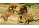 Yıl 1925: Aslanların Kararı: Et Yemek Yasaklanmıştır!