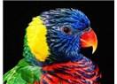 Kuşların Tüy Değiştirme Stresi