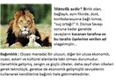 ABD, Barzani / Referandum Konusunda Türkiye'yi Hangi Gerekçe İle Satmış Olabilir (3)