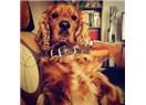 Köpeğinizin Burnu Renk Değiştiriyor mu?..