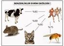Benzerlikler Evrim Değildir, Evrim Hiçbir Zaman Gerçekleşmedi