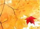 Kasımda Aşk Başkadır!