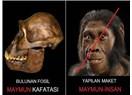 Evrim, Evrimcilerin Geniş Hayal Gücünden İbarettir!