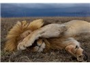 Batı Uyuyan Aslanı Uyandırır mı?