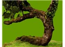 Daphne ve Apollon (Defne Ağacının Hikâyesi)