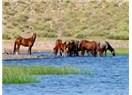 At Eti Helal Ete Karışmasın....