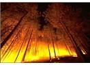 Yangın Ormanları