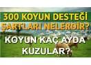Köye Geri Dönüş Projesi ve 300 Damızlık Koyun!