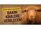 Hani Biz Türklere Keçi Çobanı Diyorlar ya 300 Koyun Yerine Keçi Verselerdi Olurdu