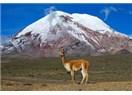 """Dördüncü Ekvador Gününde """"Abla"""" Grubu, Chimborazo Ulusal Parkı Üzerinden Riobamba'ya Giderler."""