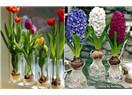 Soğanlı Çiçekleri Topraksız Yetiştir