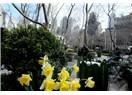 New York - Seyahat Günlüğümden 2 Soğuk Nisan Sayfası