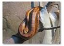 Yılan, Gömleğini Değiştirmekle Yılanlığını Kaybetmez!