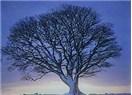 Kestane Ağacı İle Dertleşme