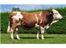 Et Dünyada 25 Türkiye'de 50 Lira, Nedeni; Üretici Ucuza Üretmeyi, Satıcı da Az Kar Etmeyi Bilmiyor