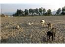 Dokuz Köpek Bir Hikâye