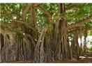 """Endonezya'daki Üçüncü Gün """"Abla"""" Grubu Bali Adası'nın Doğusuna Yönelir; Batubulan, Ubud ve İki de..."""